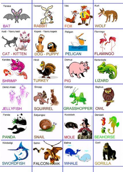 Ingilizce hayvanlar isimleri resimli